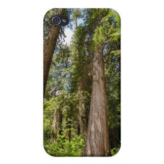 Western Red Cedar Trees iPhone 4 Cases