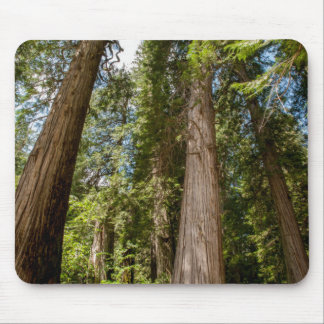 Western Red Cedar Trees Mouse Mat
