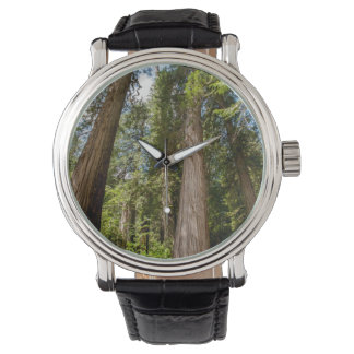 Western Red Cedar Trees Watch