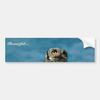 Western screech owl bumper stickers