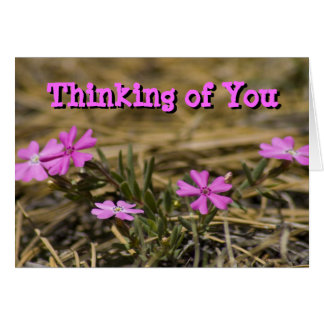 Western Showy Phlox Wildflowers Greeting Card