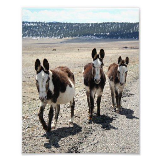 Western Street Gang Donkeys 8x10 Art Photo