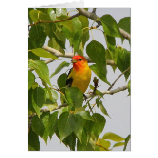 Western Tanager Card