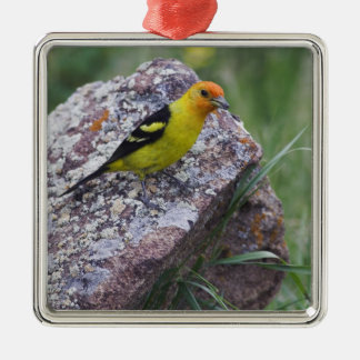 Western Tanager, Piranga ludoviciana, adult male Christmas Ornament