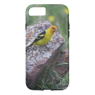 Western Tanager, Piranga ludoviciana, adult male iPhone 8/7 Case