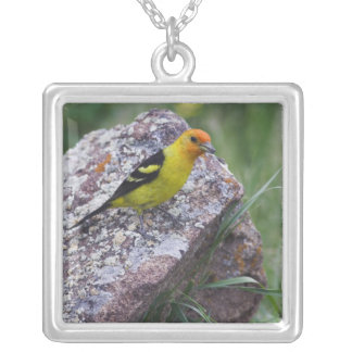 Western Tanager, Piranga ludoviciana, adult male Silver Plated Necklace