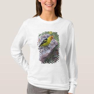 Western Tanager, Piranga ludoviciana, adult male T-Shirt