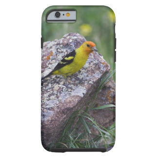 Western Tanager, Piranga ludoviciana, adult male Tough iPhone 6 Case