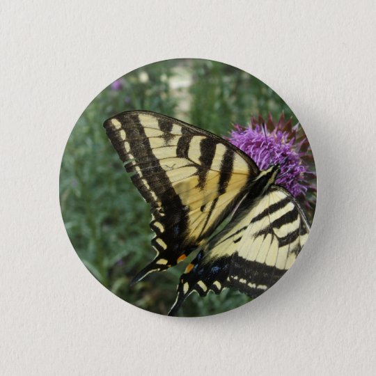 Western Tiger Swallowtail Butterfly 6 Cm Round Badge