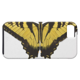 Western Tiger Swallowtail Butterfly Case For The iPhone 5