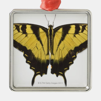 Western Tiger Swallowtail Butterfly Christmas Ornament