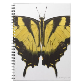 Western Tiger Swallowtail Butterfly Notebook
