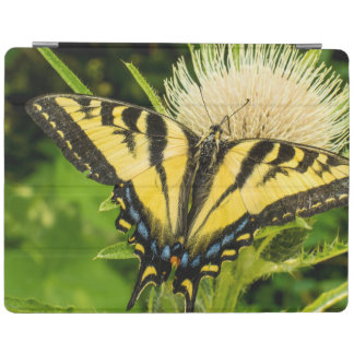 Western Tiger Swallowtail on a thistle iPad Cover