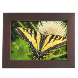 Western Tiger Swallowtail on a thistle Keepsake Box