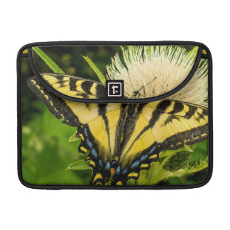 Western Tiger Swallowtail on a thistle Sleeve For MacBook Pro
