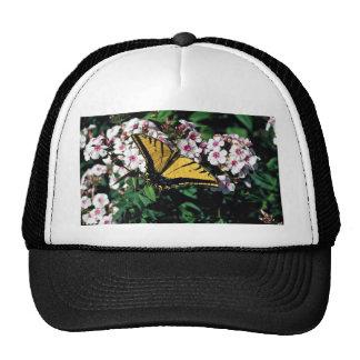 Western tiger swallowtail on white phlox top trucker hats
