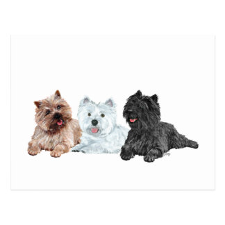 Westie and Cairn Terriers Postcards