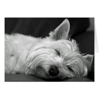 Westie Asleep Card
