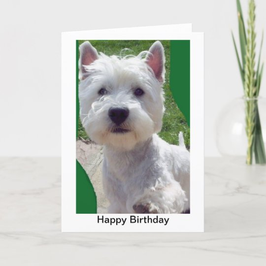 Westie Birthday Card Greetings Card Paw Up Hello Zazzle