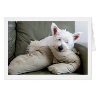 Westie Dog So Comfy and Cozy Blank Card