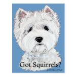 Westie  Got Squirrels? Post Card