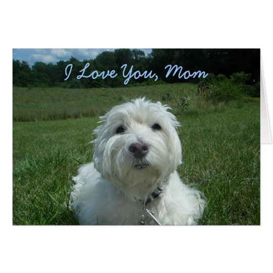 Westie I Love You Mum Happy Mother's Day