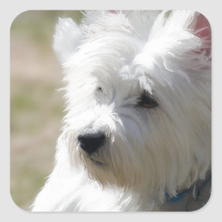 westie in the spring  time.jpg square sticker