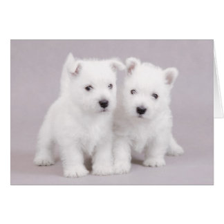 Westie puppies card