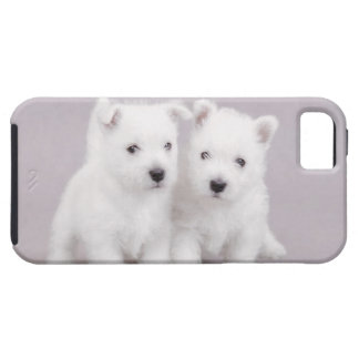 Westie puppies case for the iPhone 5
