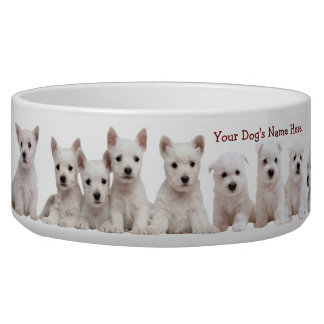 Westie Puppies Waiting Patiently For Their Food Pet Water Bowls