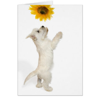 Westie Puppy and Sunflower Blank Note Card