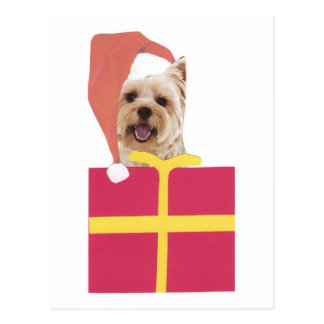 Westie Santa Hat Gift Box Post Card