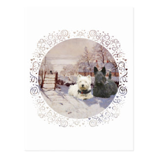Westie & Scottie Winter Magpie Postcard