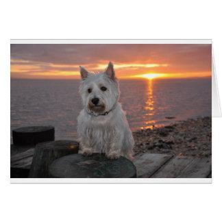 Westie Sunset Card