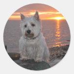 Westie Sunset Round Sticker