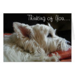 Westie Thinking of You Photo Greeting Card