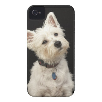 Westie (West Highland terrier) with collar iPhone 4 Case