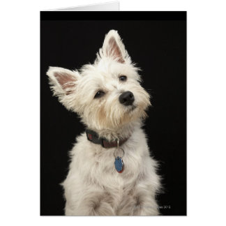Westie (West Highland terrier) with collar Greeting Card