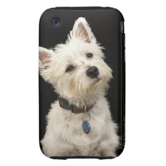 Westie (West Highland terrier) with collar iPhone 3 Tough Cases
