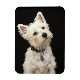 Westie (West Highland terrier) with collar Magnet