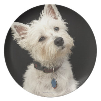 Westie (West Highland terrier) with collar Party Plates