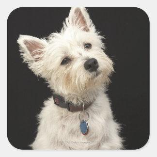 Westie (West Highland terrier) with collar Square Sticker