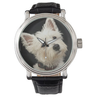Westie (West Highland terrier) with collar Watch
