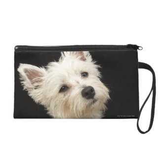 Westie (West Highland terrier) with collar Wristlets