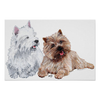 Westie with a Brown Cairn Terrier Posters