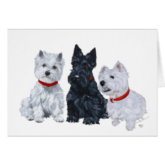 Westies and a Scottie Together Cards