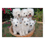 Westies in a Basket Greeting Card