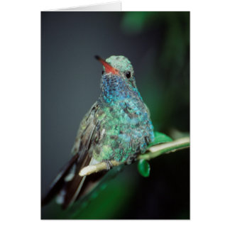 Westmorland, Westmorland Tobaso, Hummingbird Card
