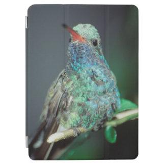 Westmorland, Westmorland Tobaso, Hummingbird iPad Air Cover