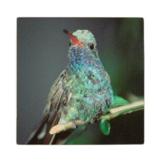 Westmorland, Westmorland Tobaso, Hummingbird Maple Wood Coaster